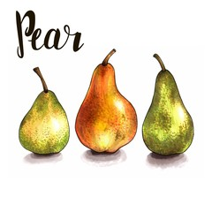 three ripe pears on a white. sketch made by hand