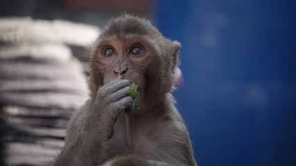 monkey baby 3