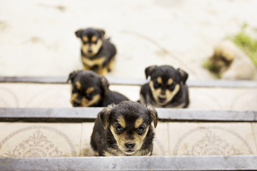 Photo portrait of dog family outdoors, group of small puppies outdoors