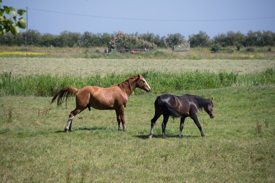 chevaux en normandie