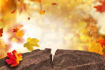 Herbstlandschaft Baum Scheibe