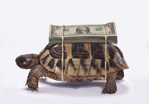 Tortuga cargando billetes de dolar sobre caparazon.