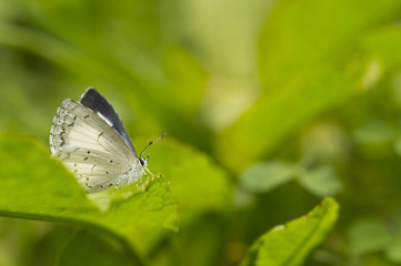 white butterfly posing on a green leaf