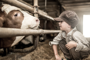Junge im Kuhstall
