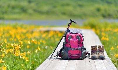 初夏・花々の湿原・ハイキングイメージ