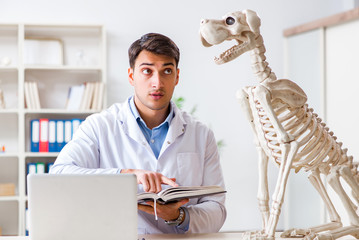 Doctor vet practicing on dog skeleton