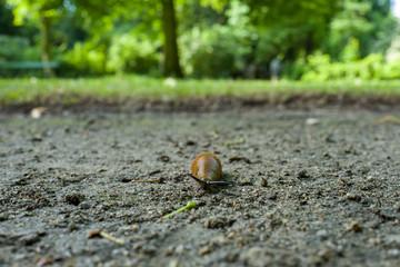 close-up of slug in park