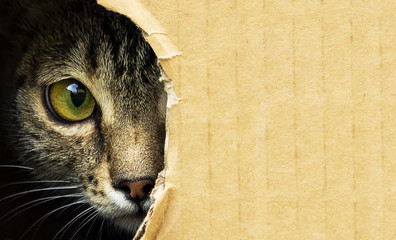 Wall Murals Hand drawn Sketch of animals cat curiously looks out from a dark hole in a cardboard box, photo with an open background.