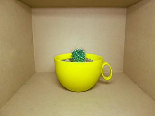 A small globular cactus in a bright yellow pot is inside a brown rectangular box. Colorful creative picture in green-yellow-brown color in minimal style - the concept of life in a box