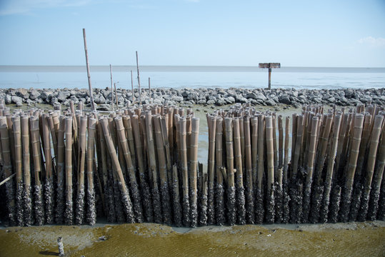 Mangrove forest without trees. Bamboo barrier between the sea and the earth.