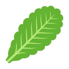 Green vegetarian lettuce leaf flat vector icon for vegetable apps and websites