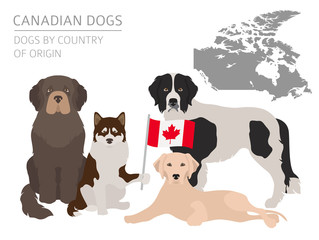 Dogs by country of origin. Canadian dog breeds. Infographic template