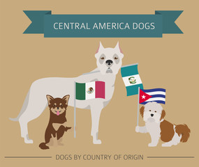 search photos mexican pitbull