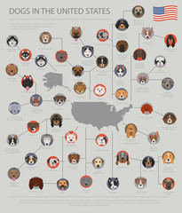 Dogs in the United States. American dog breeds. Infographic template