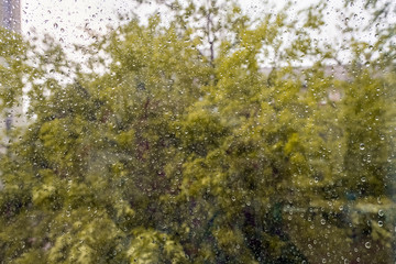Wet home window with raindrops Trees behind a wet window