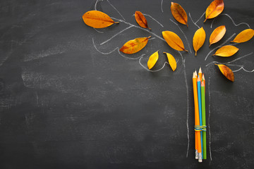 Back to school concept. Top view image of pencils next to tree sketch with autumn dry leaves over classroom blackboard background