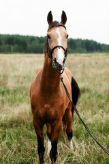 Beautiful horses, animals, pasture, stables, horseback riding
