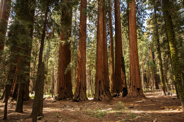 Mother with infant visit Sequoia national park in California, USA