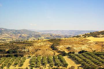 Vineyards in mountains of Cyprus against blue sky
