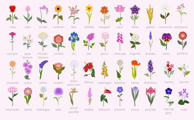 Your garden guide. Top 50 most popular flowers infographic
