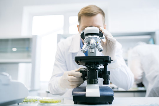 Male scientist studying green vegetables under microscope standing at desk with white laboratory and microbiologist on blurred background