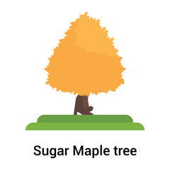 Sugar Maple tree icon vector sign and symbol isolated on white background, Sugar Maple tree logo concept
