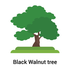 Black Walnut tree icon vector sign and symbol isolated on white background, Black Walnut tree logo concept