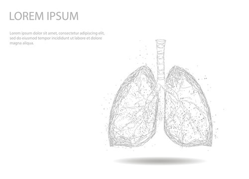 Human Internal Organ Lungs. Abstract image of a starry sky or space, consisting of points, lines, and shapes in the form of planets, stars and the universe. Low poly vector