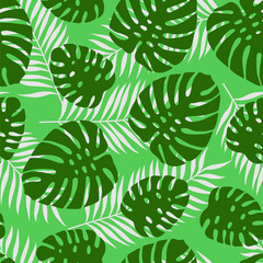 Monstera. Seamless pattern of tropical palm leaves. Vector illustration.