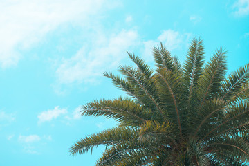 Palm on blue sky background. Vacation, travel, tropical theme.