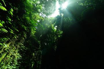 猿島の太陽の光