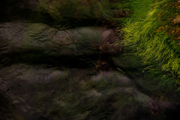 green moss on a stone in the sea
