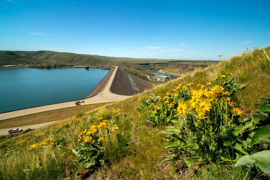 Yellow wildflowers above roads that lead over a Dam on the Boise River