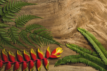 Green and red tropical plants on wood background, natural texture