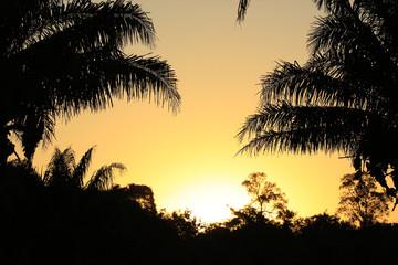 Sundown behind Exotic Vegetation. Pantanal, Brazil
