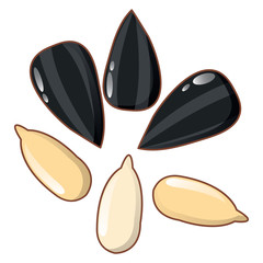Sunflower seeds icon. Cartoon of sunflower seeds vector icon for web design isolated on white background