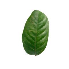 Leaf of Tropical fruit Longkong on white background