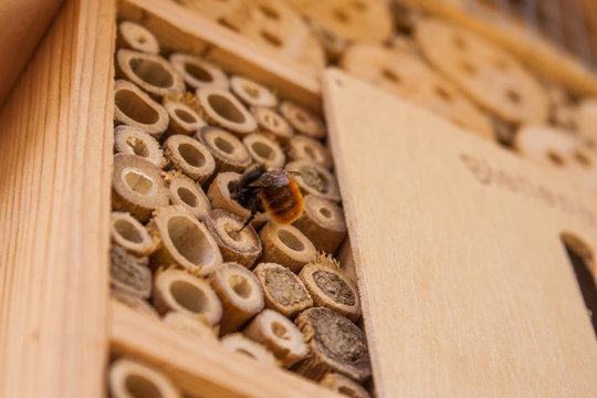 Close up of a wild bee building its home in a wooden bee hotel hanging on the outside wall of a house. Insect house is a manmade structure created to provide shelter for insects.
