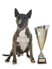 Fototapete - bull terrier and cup