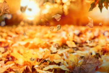 Herbstlandschaft mit Sonnenlicht Bokeh