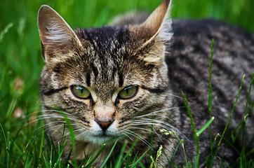 The cat walks in the fresh air