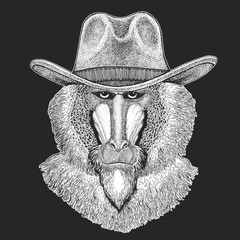 Monkey, baboon, dog-ape, ape. Wild west. Traditional american cowboy hat. Texas rodeo. Print for children, kids t-shirt. Image for emblem, badge, logo, patch.