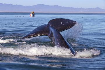 Whale watching in Ojo De Liebre Lagoon, Baja California Norte, Mexico