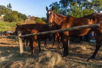 Horses Dozens Grouped Together Outdoor Paddocks