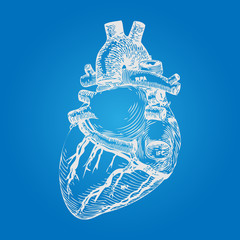 Realistic Human Heart Sketch. Hand Drawn style. Vector