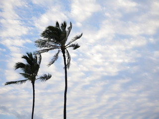two palm trees on blue fluffy clouds sky background