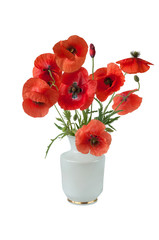beautiful bouquet of poppies in a ceramic white vase on a white background.