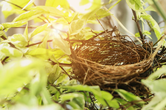 Empty bird nest in garden.Nest made from dry grass.