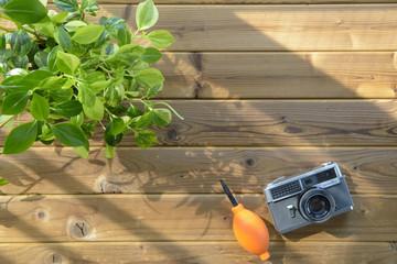 観葉植物とカメラ