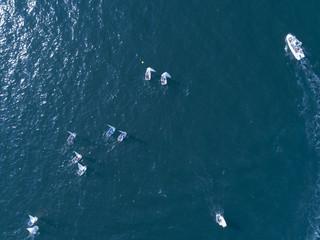 複数のヨットが並んで海を走っている